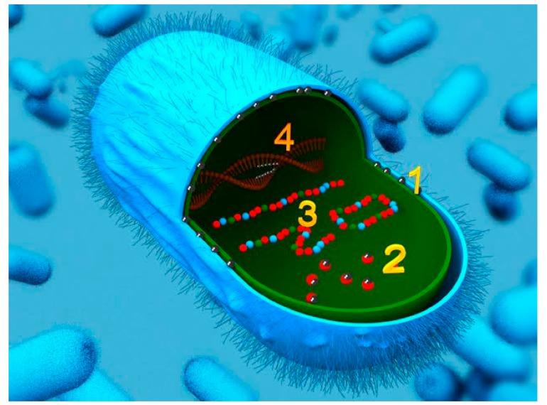 Bactérie argent colloïdal
